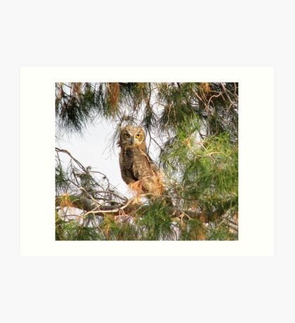 Fledgling - Great Horned Owl 2 Art Print