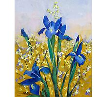 Iris and Forsythia Photographic Print