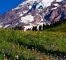 Rainier Wildflowers by RavenFalls