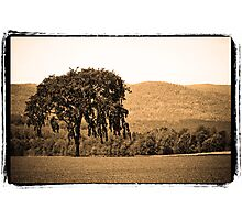 The master of the tree Photographic Print
