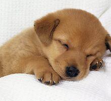 PRETTY DOG by Masteno