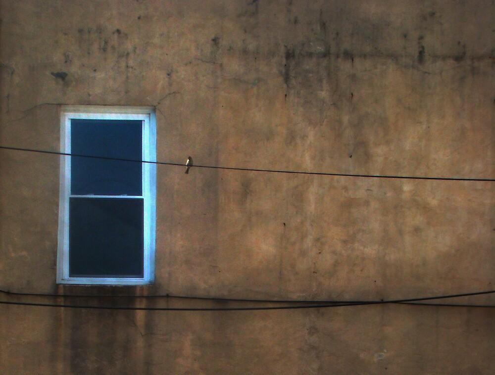 one window one wire one bird  by Isa Rodriguez