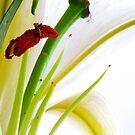 Lily abstract by Tamara Travers