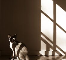 Mabel in the Light by Belle Farley