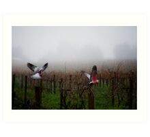 galahs in the mist Art Print