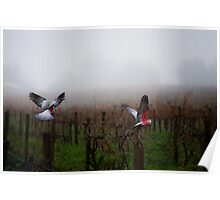 galahs in the mist Poster