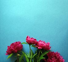 bunch of pink peony flowers against blue background by OlgaBerlet