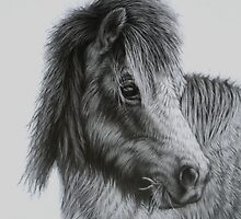 Shetland Pony by Margaret Stockdale