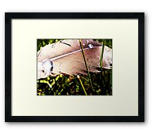 Touch Feel Fly Fade Framed Print