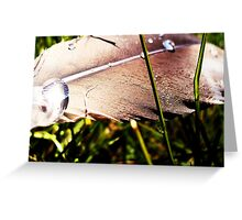 Touch Feel Fly Fade Greeting Card