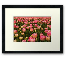 Candy Tulips Framed Print