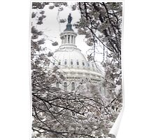 Capital Hill - Cherry Blossoms Poster