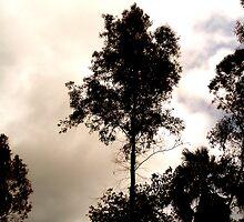 Trees CXLIV by ChikoFueji