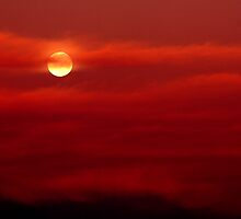 Red Sky at Night, Sailors Delight by Jennifer Saville