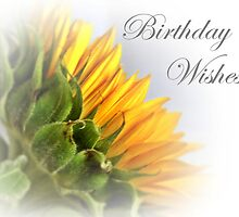 Yellow Sunflower Birthday Card by Aj Finan