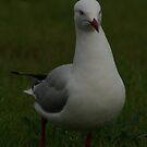Seagullian Obesity by jensw61