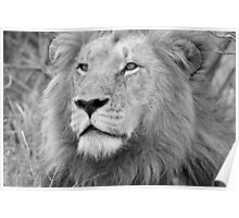 Portrait of a King of the Bush! Poster