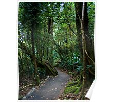 A Path through the Forest Poster