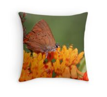 Coral Hairstreak Butterfly Throw Pillow