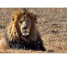 Male Lion Photographic Print