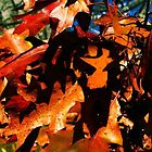 Ablaze by emilymhanson
