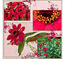 Zinnias Four Photo Collage  Photographic Print