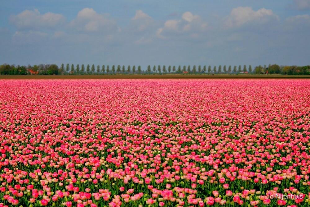 Candy Tulip Field by Jo Nijenhuis