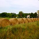 rolling in the hay by DarylE
