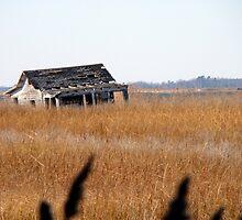 On the Marsh by Kathryn Simon