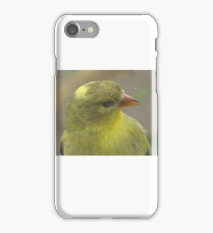 Bird that wanted in my house iPhone Case/Skin