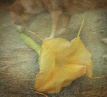 Big Flower by Laurie Search