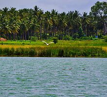 Nature by Jagadeesh Sampath