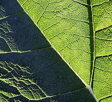 Giant Rhubarb Leaf by Gary Rayner