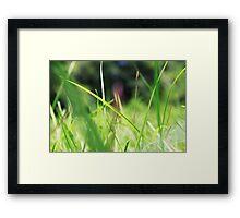 Macro Lawn Framed Print