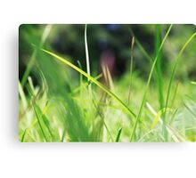 Macro Lawn Canvas Print