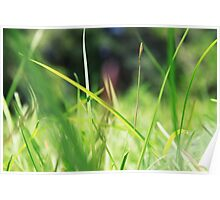 Macro Lawn Poster