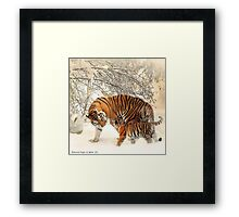 Siberian Tiger and Cub Framed Print