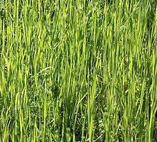 Green grass on a summer field by Atanas Bozhikov NASKO