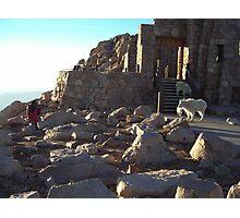 Man shooting a mountain goat Photographic Print
