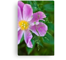 Peony and Straw of Grass Canvas Print