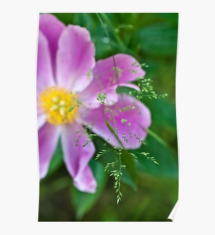 Peony and Straw of Grass Poster