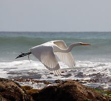 White in Flight One by tom j deters
