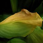 Hosta (view larger) by carol selchert