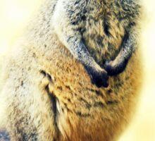 Little Wallaby Sticker