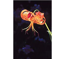 TURKS CAP LILY* Photographic Print