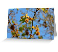 Plane tree in the sunlight, Rhodopi Mountains in Southern Bulgaria Greeting Card