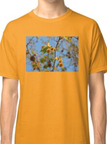 Plane tree in the sunlight, Rhodopi Mountains in Southern Bulgaria Classic T-Shirt