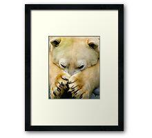 423 polar Framed Print