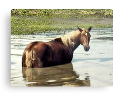 """Horses with Attitude, No. 2, ""What You Lookin' At?'""... prints and products Metal Print"