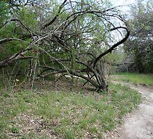 Ft. Clark Bullwhip Branch by Michael Kennedy